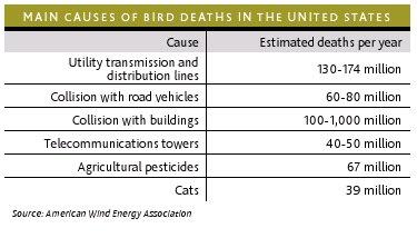 Doodsoorzaak vogels
